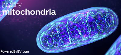Mitochondria Is The Powerhouse Of The Cell Creating Energy